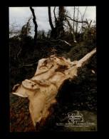 22 - GOMENE - La Corbinière Des Landes - Chêne Sculpté - Arbres - France
