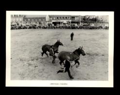 29 - LANDIVISIAU - Concours Régional Du Cheval Breton - 1983 - Landivisiau