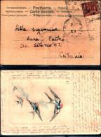 4302a)cartolina-  Rondini In Volo