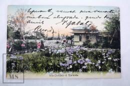 Early 20th Century Japan Postcard - Iris Garden At Kamata, Yokohama - Posted - Yokohama