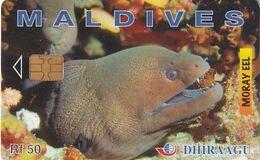 MALDIVES ISL. - Moray Eel, CN : 256MLDGIB, Used - Maldives