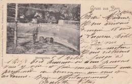 Switzerland Gruss Aus Bern Baerengraben 1898