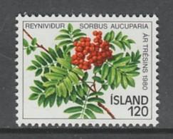 TIMBRE NEUF D´ISLANDE - GRAPPE ET BARNCHE DU SORBIER (SORBUS AUCUPARIA) N° Y&T 507 - Bäume