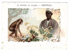 SÉNÉGAL - A Travers Le Monde - SINGE - CHIMPANZÉ - MONKEY - Ed. F. Nathan, Paris - Senegal