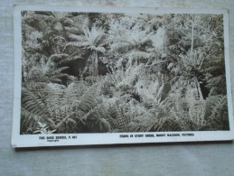 D143369 Australia  Victoria - Ferns In Stony Creeks Mount  Macedon - RPPC - Australia