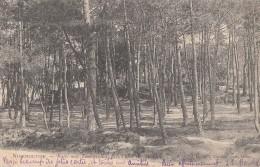Noirmoutier 85 - Butte Aux Tourterelles Allée Des Soupirs - 1903 - Noirmoutier