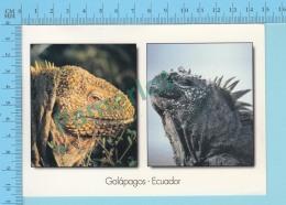 Galapados Ecuador,Iguane Terreste , Multi-View , Used In 2002 Stamp- 2 Scans - Equateur