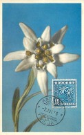 Andorre Edelweiss Leontopodium Alpinum 10 Cts    Carte Maximum Card CM - Spanisch Andorra