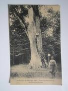 Environs De Neufchâteau Forêt De St Ouen Les Parey Le Chêne Des Partisans TACQUENET 2e Bataillon De Chasseur TROYES 1916 - France