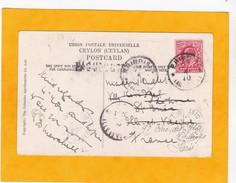 1910 CP De Ceylan - GB Vers  France Par Brindisi - Timbre Edouard VII  Seul  - Vue Enfants Et Palmier - Levant Britannique