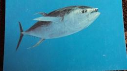CPM THON A NAGEOIRES JAUNES   WWF PHOTO WATT - Pesci E Crostacei