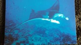 CPM MANTA RAY RAIE  WWF PHOTO RICHARD JOHNSON - Vissen & Schaaldieren