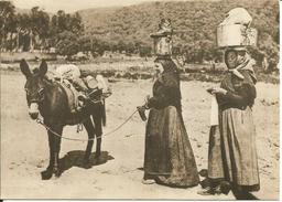CPSM (20) CORSE 1900 Scènes Et Types, Bergères - édit Mouflon C 10 (âne, Femmes, Bassine Et Chaussures Sur La Tête) - Corse