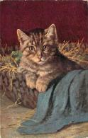 Chat - Chaton Dans Un Panier Rempli De Paille - Katten