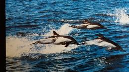 CPM  COMMON DOLPHIN DAUPHIN  WWF PHOTO GOHIER - Dauphins