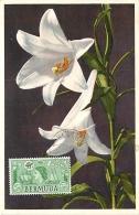 Bermuda Lilium Longiflorum   Carte Maximum Card CM