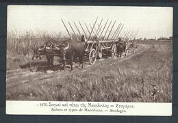 +++ CPA - Scènes Et Types De MACEDOINE  - Attelages  // - Macédoine