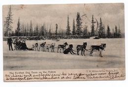 THE SWIFTEST DOG TEAM ON THE YUKON - Yukon
