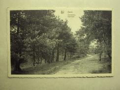 26832 - GENK - DENNENBOS - ZIE 2 FOTO'S - Genk