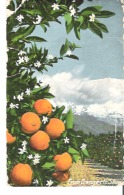 From Oranges To Show  California - Farms