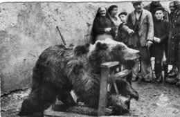 Les Pyrenees: Au Village, Exposition D'un Ours - Altri Comuni