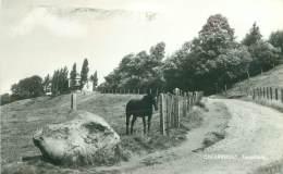 CHEVREMONT - Toupsberg - Chaudfontaine