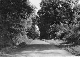 50 - VARENGUEBEC. Sous-Bois D´Etenclin (Manche) Proche La Haye Du Puits Cpsm - Autres Communes