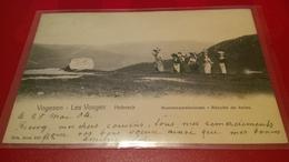 Vogesen Les Vosges Hohneck Recolte De Baies Nels - France