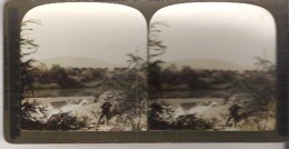 South Africa - Stereoscope Cards