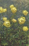 AK 0562  Trollblumen - Photochromie Um 1930-40 - Blumen
