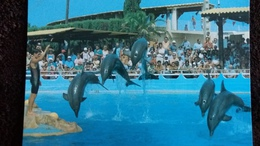 CPM MARINELAND D ANTIBES REVERENCE DES DAUPHINS 2 - Dauphins