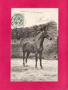 LA NORMANDIE, Produit Normand, Magnifique Pur-Sang, Cheval, 1905, (La C.P.A.) - Basse-Normandie