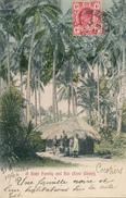 TRANSVAAL - Johannesburg - 1906 , A Kafir Family And Hut , Kafir Familie Vor Ihrer Hütte - Südafrika