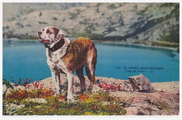 A SAISIR !!!! LE GRAND SAINT-BERNARD - Hunde