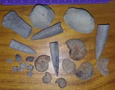 Lot De Petits Fossiles - Archeologie