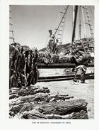 1951 - Héliogravure - Bonifacio (Corse) - Un Chargement De Liège Au Port - FRANCO DE PORT - Ohne Zuordnung