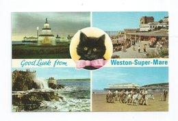 CPSM GB Multi-vues Weston Super Mare Cat Chat - Weston-Super-Mare