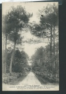 Taussat Les Bains ( Bassin D'Arcachon ) Avenue De La Gare Et Les Grands Pins  - Obe25112 - Arcachon