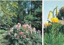 Paeonia Anomala - Lilium Kesselringianum - Lily - Moscow Botanical Garden - 1988 - Russia USSR - Unused - Fleurs, Plantes & Arbres