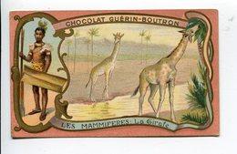 Mammifères  Girafe Chocolat Guérin Boutron - Guerin Boutron