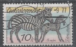 Czechoslovakia 1976. Scott #2084 (U) Fauna, Zebras In Dvur Kralove Zoo - Used Stamps