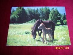 THEME  LES  CHEVAUX AVEC PHILATELIE  ° ROYAUME UNIS - Horses