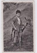 Le Petit  Chevrier Alpes Fribourgeoises, Chèvres, Carte-photo - Elevage