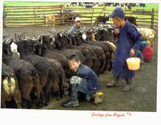 Asie - Mongolie - Chèvres - Mongolië