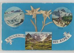 Souvenir Des Alpes Fleurs Collées Oisans Meije ... - Bourg-d'Oisans