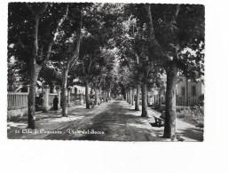 LIDO DI CAMAIORE - VIALE DEL SECCO  VIAGGIATA FG - Lucca
