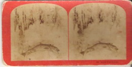 223. Seven-Pound Trout - Stereoscope Cards