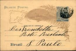 BRÉSIL - Entier Postal Illustré Au Verso Voyagé - A Voir - L 5646 - Postal Stationery