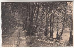 Houyet, Vers La Haie D'Ardenne (pl31416) - Houyet