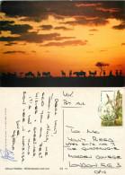 Wildebeest, Lion, Kenya Postcard Posted 1985 Stamp - Kenya